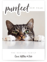 A Purrfect Christmas Holiday Postcards