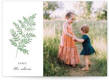 painted fern by annie clark