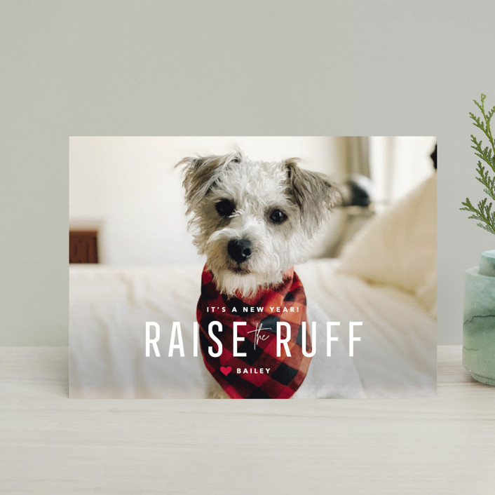 """Paws for Claus"" - Funny Holiday Postcards in Snow by Guess What Design Studio."