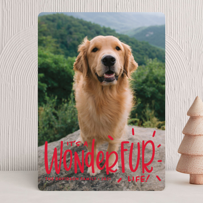 """It's a Wonder-FUR Life"" - Funny Holiday Photo Cards in Cherry by Sandra Picco Design."