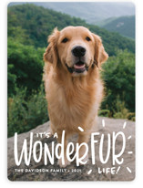 This is a white holiday photo card by Sandra Picco Design called It's a Wonder-FUR Life with standard printing on smooth signature in standard.