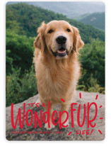 This is a red holiday photo card by Sandra Picco Design called It's a Wonder-FUR Life with standard printing on smooth signature in standard.