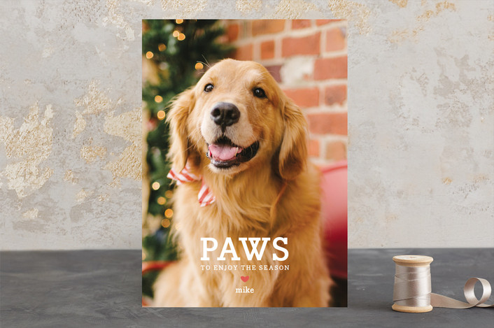 """""""Paws"""" - Full-Bleed Photo, Modern Holiday Photo Cards in Red Berry by Guess What Design Studio."""