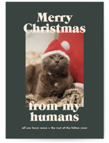 This is a green holiday photo card by Annie Clark called Happy Howlidays with standard printing on signature in standard.