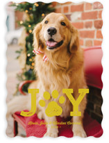 This is a yellow holiday photo card by Lea Delaveris called Paw Print with standard printing on smooth signature in standard.