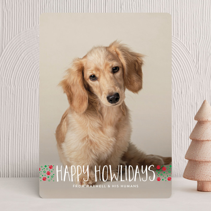 naughty dog Holiday Cards