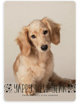 This is a black holiday photo card by Erin Deegan called naughty dog with standard printing on smooth signature in standard.