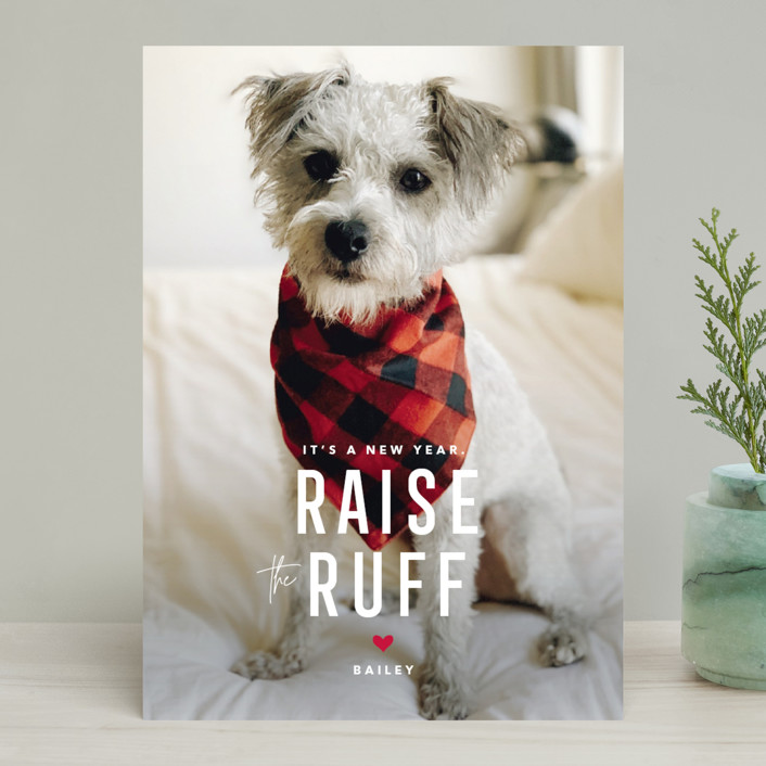 """""""Paws for Claus"""" - Funny Holiday Photo Cards in Snow by Guess What Design Studio."""