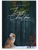 This is a white holiday photo card by Jessica C. Nugent called Furry Christmas with standard printing on smooth signature in standard.