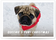 This is a white holiday photo card by Up Up Creative called Furst Christmas with standard printing on signature in standard.