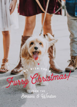Furry Christmas Holiday Photo Cards By Eric Clegg