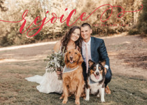 Sweeping Rejoice Holiday Photo Cards By Melanie Severin