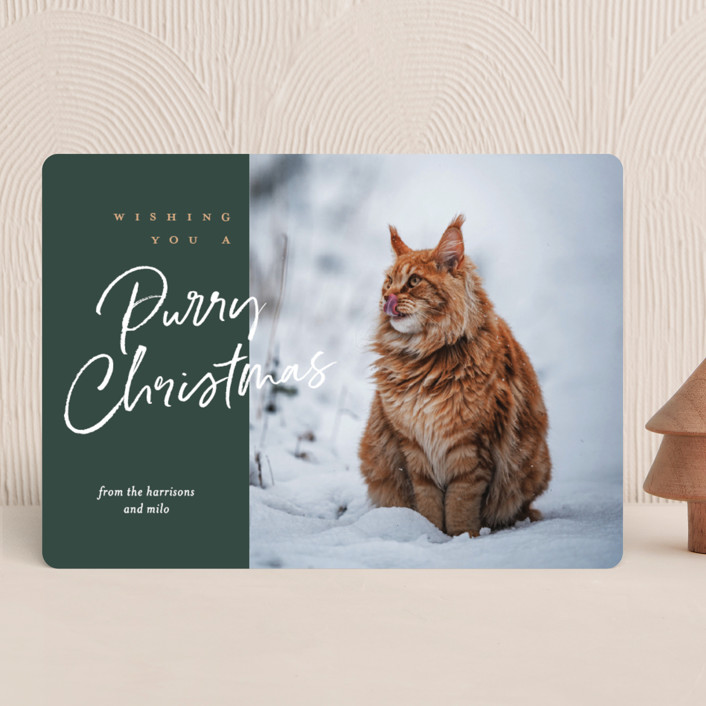 """""""purry christmas"""" - Funny Holiday Photo Cards in Evergreen by Eric Clegg."""