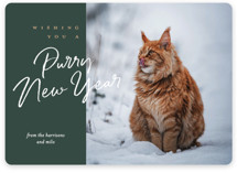 This is a green holiday photo card by Eric Clegg called purry christmas with standard printing on smooth signature in standard.