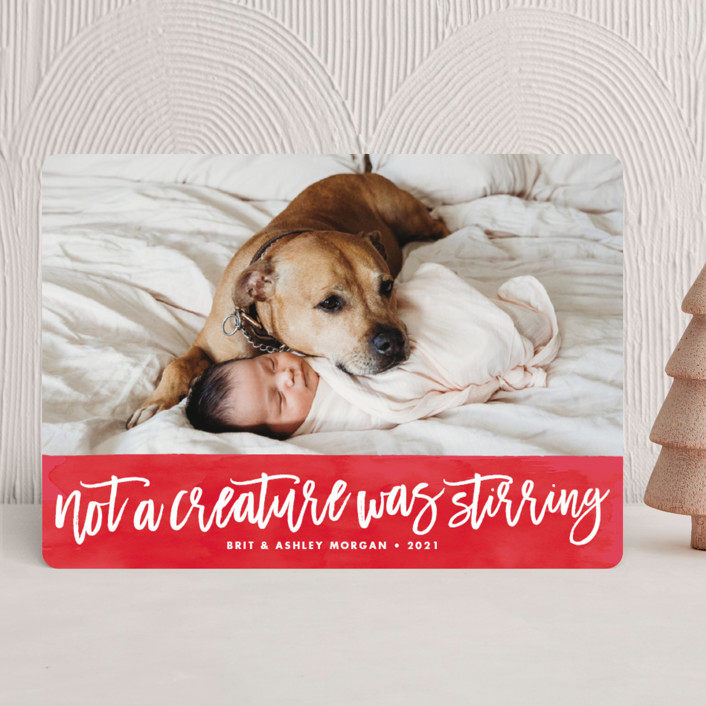 """""""Not a Creature was Stirring..."""" - Holiday Photo Cards in Holly Berry by Brooke Chandler."""