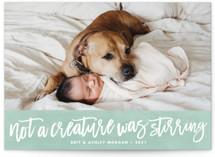 Not a Creature was Stirring... Holiday Photo Cards