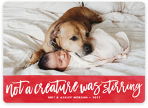 This is a non classic colors holiday photo card by Brooke Chandler called Not a Creature was Stirring... with standard printing on smooth signature in standard.
