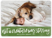 This is a green holiday photo card by Brooke Chandler called Not a Creature was Stirring... with standard printing on smooth signature in standard.