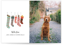 This is a white holiday photo card by Celeste Duffy called The Dog's Stocking Wish with standard printing on smooth signature in standard.