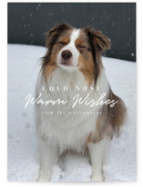 This is a white holiday photo card by Karidy Walker called cold nose with standard printing on smooth signature in standard.