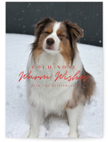 This is a red holiday photo card by Karidy Walker called cold nose with standard printing on smooth signature in standard.