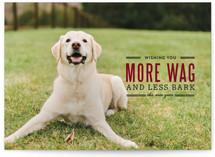 More Wag Less Bark by Lauren Hampton