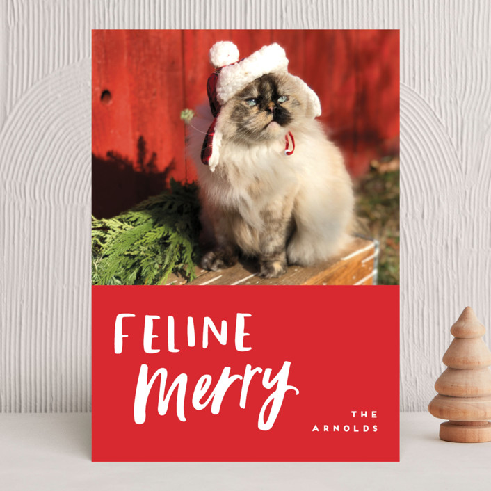 """""""Feline Merry"""" - Funny Holiday Photo Cards in Santa Suit by Chryssi Tsoupanarias."""