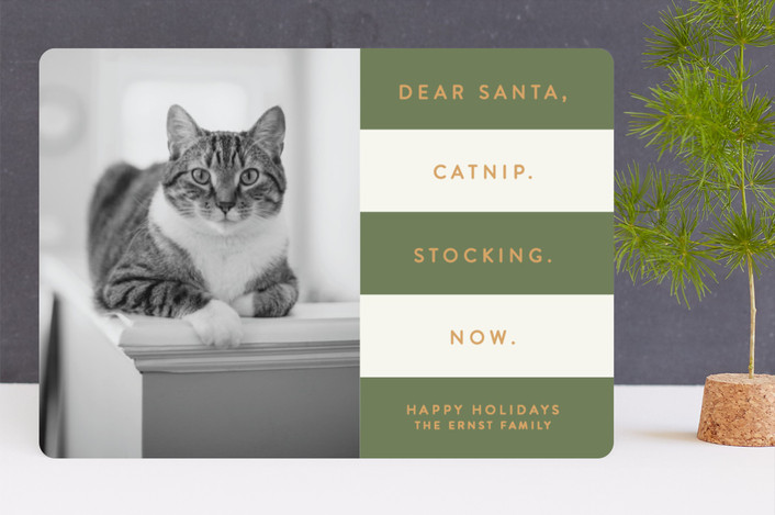 """Catnip Now"" - Funny Holiday Photo Cards in Forest by Sara Heilwagen."