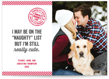 still cute holiday photo cards by paper dahlia - Pet Holiday Cards