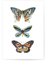This is a colorful greeting card by Lauren Rogoff called Butterfly Watercolors with standard printing on signature in greeting cards.