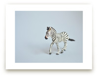 Oh, Zebra by Kinga Subject