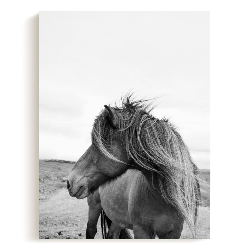 A Horse and the Wind Children's Art Print