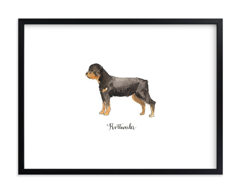 """Rottweiler"" - Limited Edition Art Print by Megan Kelso in beautiful frame options and a variety of sizes."