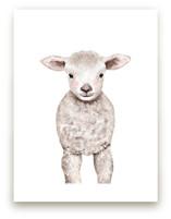 Baby Animal Sheep