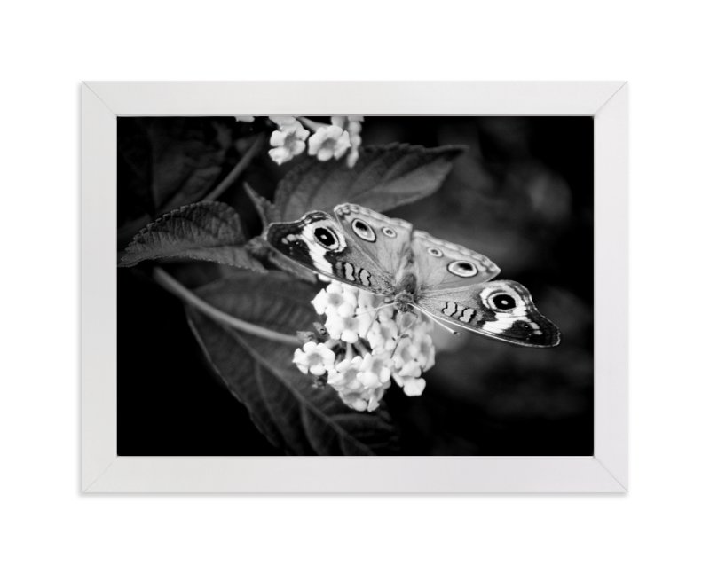 """Common Buckeye"" - Art Print by Donna Rosser in beautiful frame options and a variety of sizes."