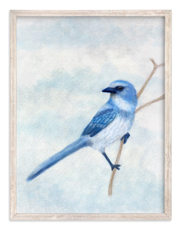 """Scrub Jay"" - Art Print by iamtanya in beautiful frame options and a variety of sizes."