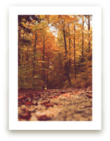 Fall in the Woods 2 by Heather Squance