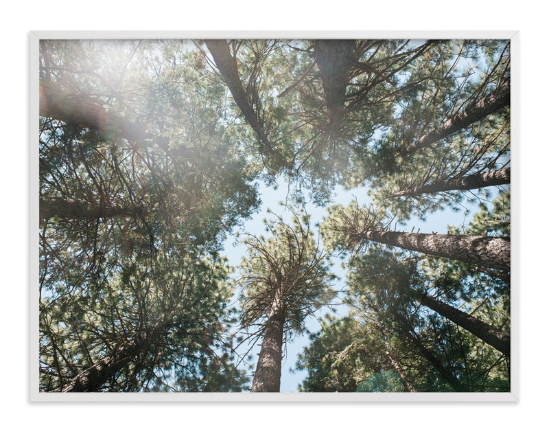 """Up at the Trees"" - Art Print by Anna Western in beautiful frame options and a variety of sizes."