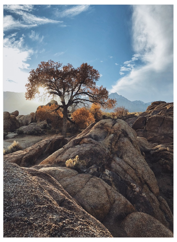 """""""The Magic Tree"""" - Art Print by Christian Florin in beautiful frame options and a variety of sizes."""