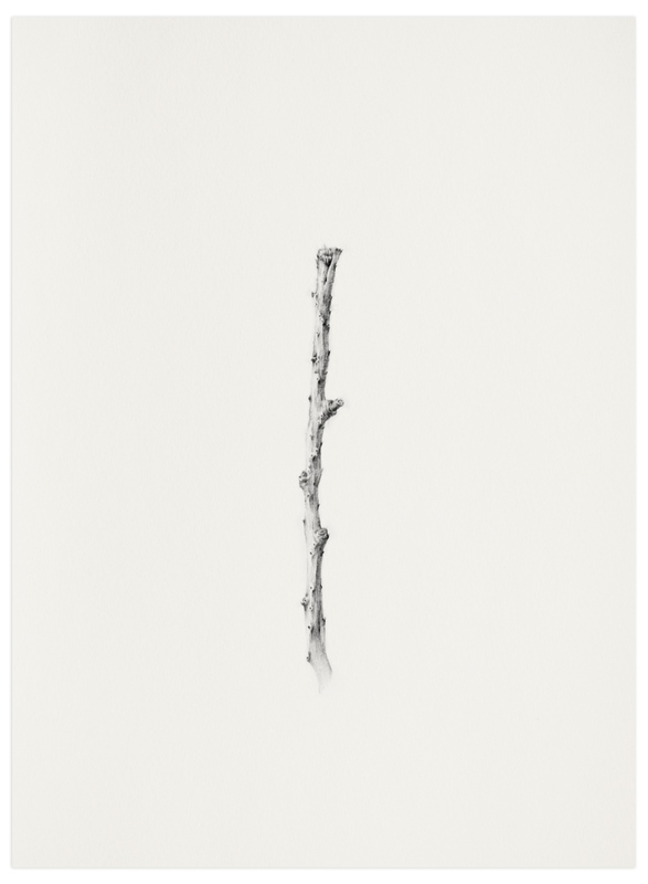 """Twig- Solitude 03"" - Art Print by jinseikou in beautiful frame options and a variety of sizes."