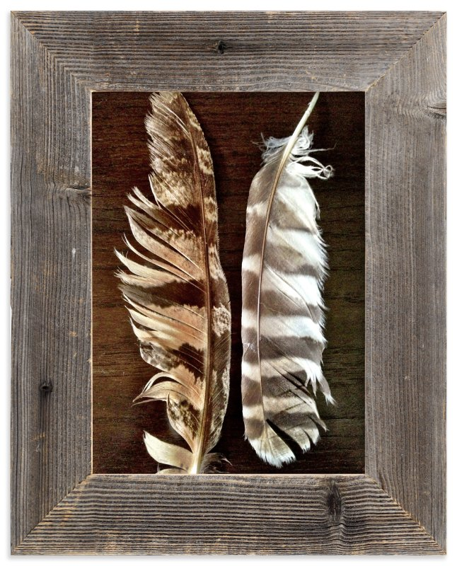 """""""Fallen Quills"""" - Art Print by Misty Hughes in beautiful frame options and a variety of sizes."""