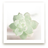Soft Succulent No. 2