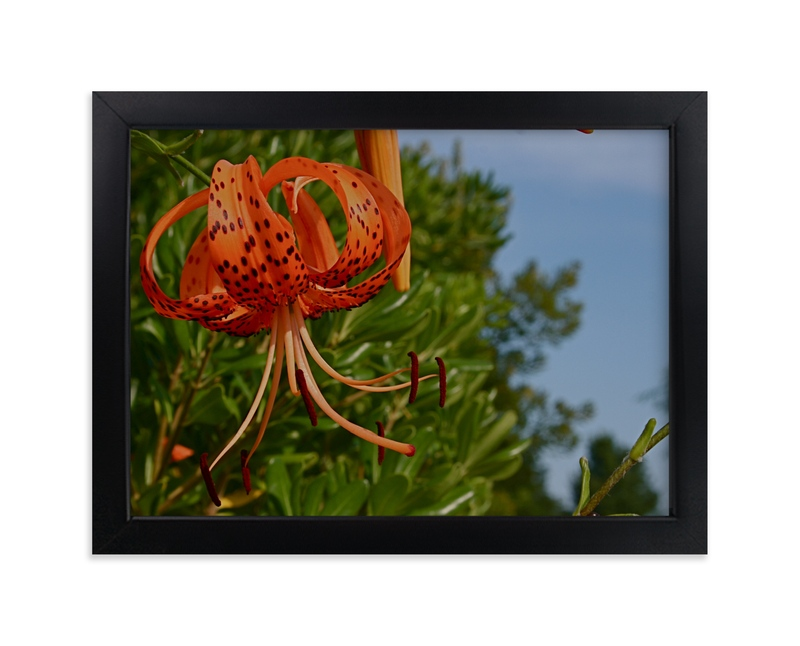 """""""Springtime Blooming"""" - Art Print by AJD in beautiful frame options and a variety of sizes."""