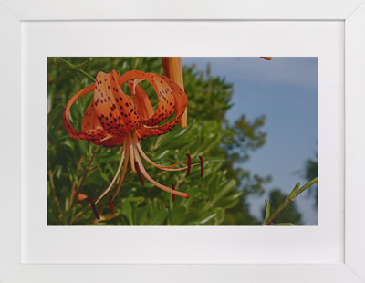 Springtime Blooming  Art Print