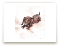 Weiner dog with a nose full of snow