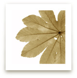 Leaf in Amber