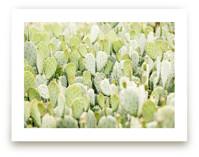 Cactus Gathering by Kristi Jackson