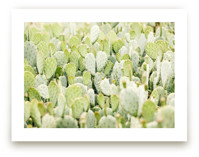 Cactus Gathering