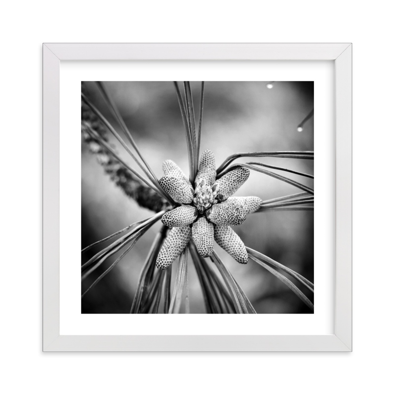 """Pine Catkins"" - Art Print by Becky Nimoy in beautiful frame options and a variety of sizes."