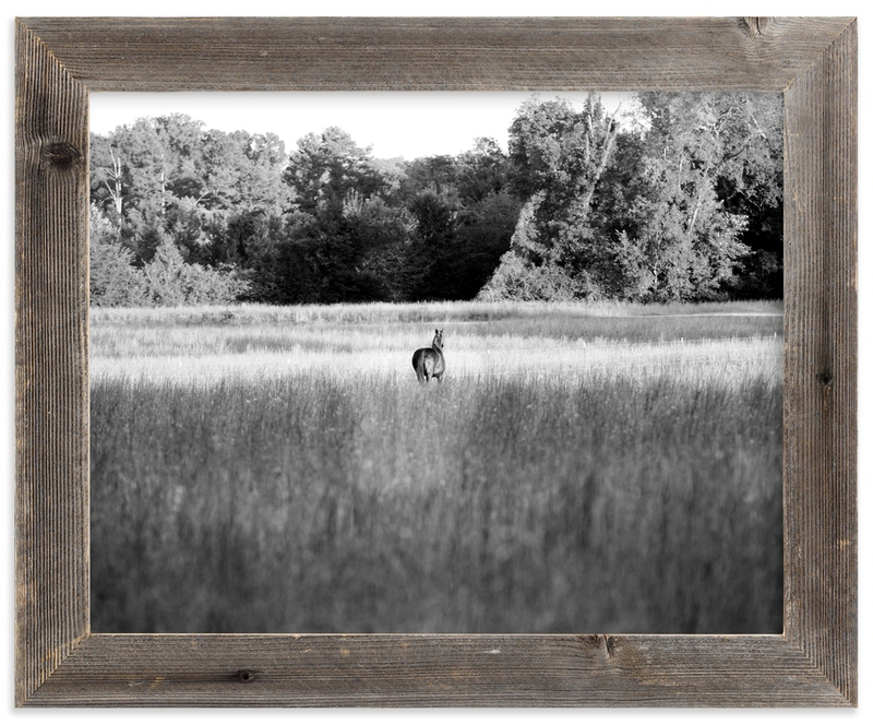 """Open Field"" - Art Print by Hannah Graham in beautiful frame options and a variety of sizes."